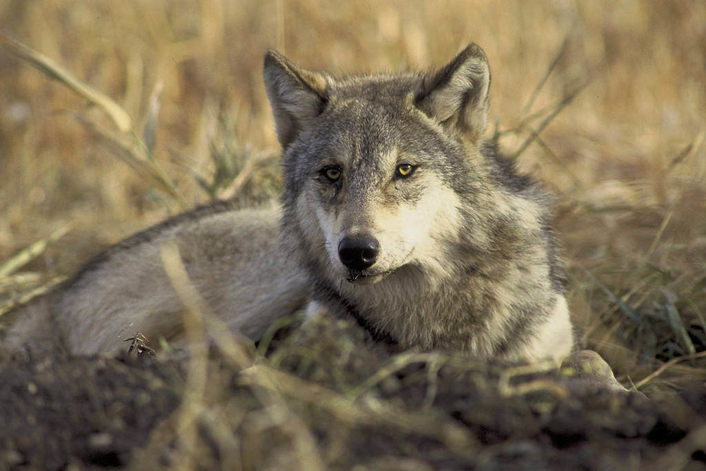 10 Ways To Help Wildlife
