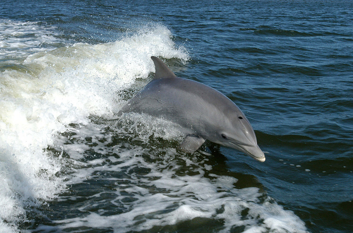 Dolphins Under Threat