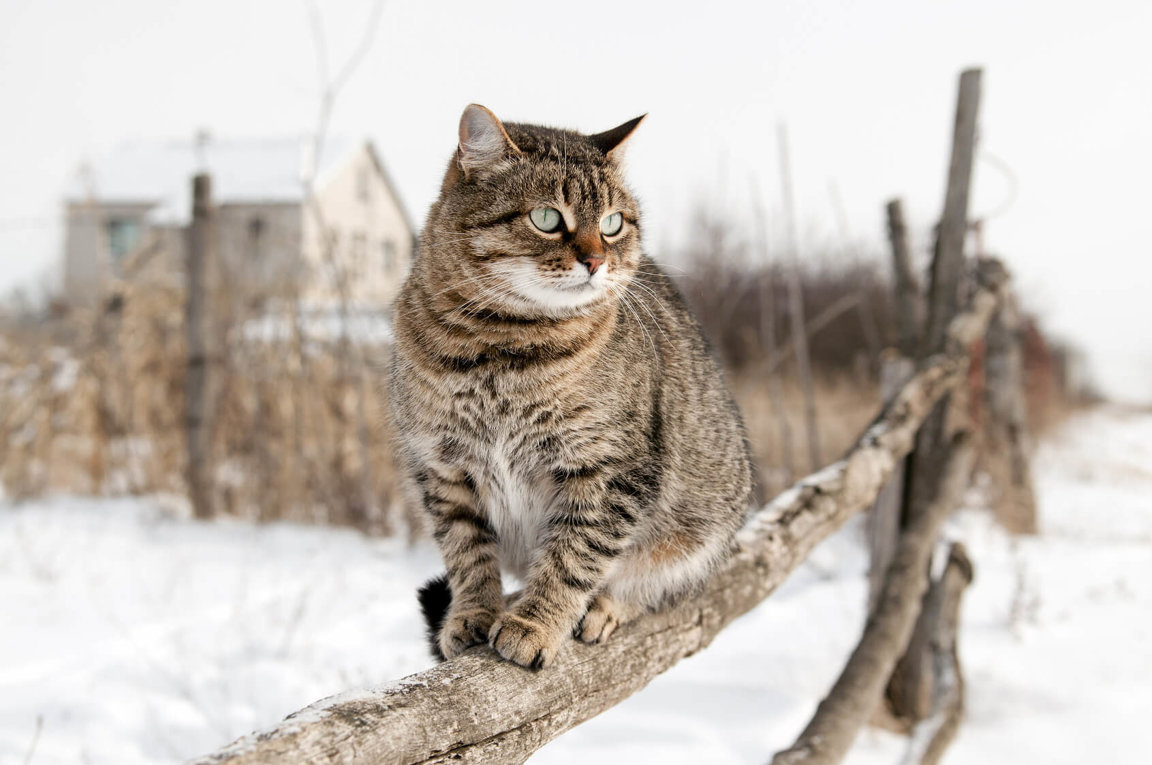 Protect Outdoor Cats In Winter