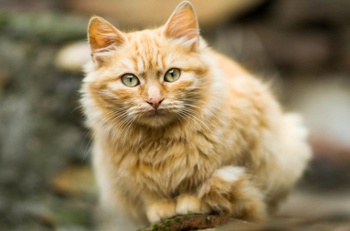 Feral Cats & Birds