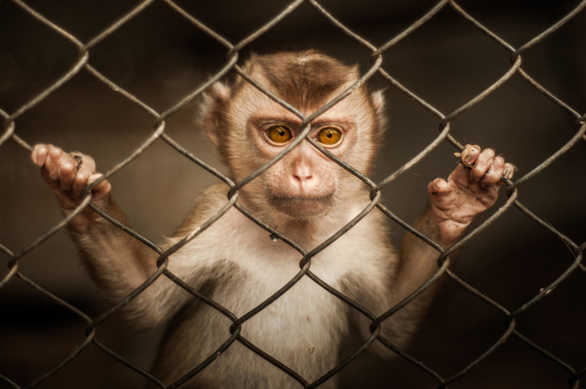 Drug Testing On Animals