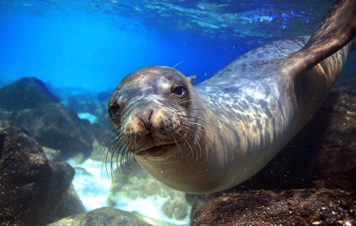 Seal Hunting