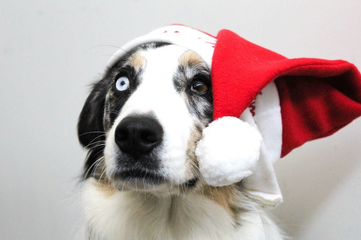 Companion Animals & The Holiday Season