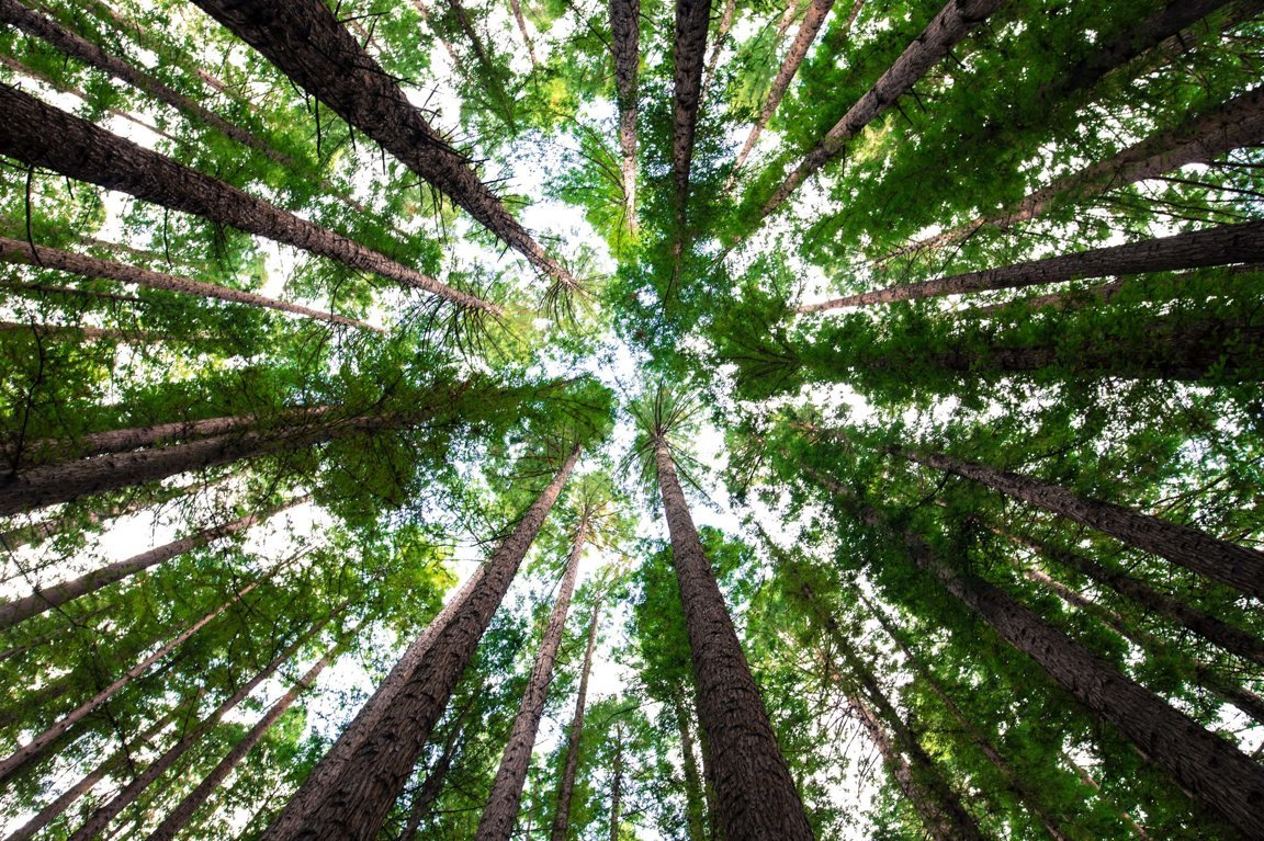 Tropical Forests & Logging