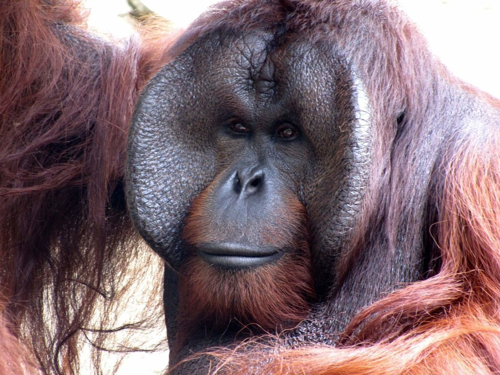 Palm Oil Threatens Wildlife