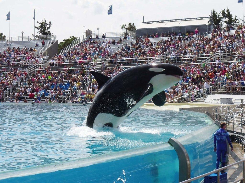 Marine Mammal Parks