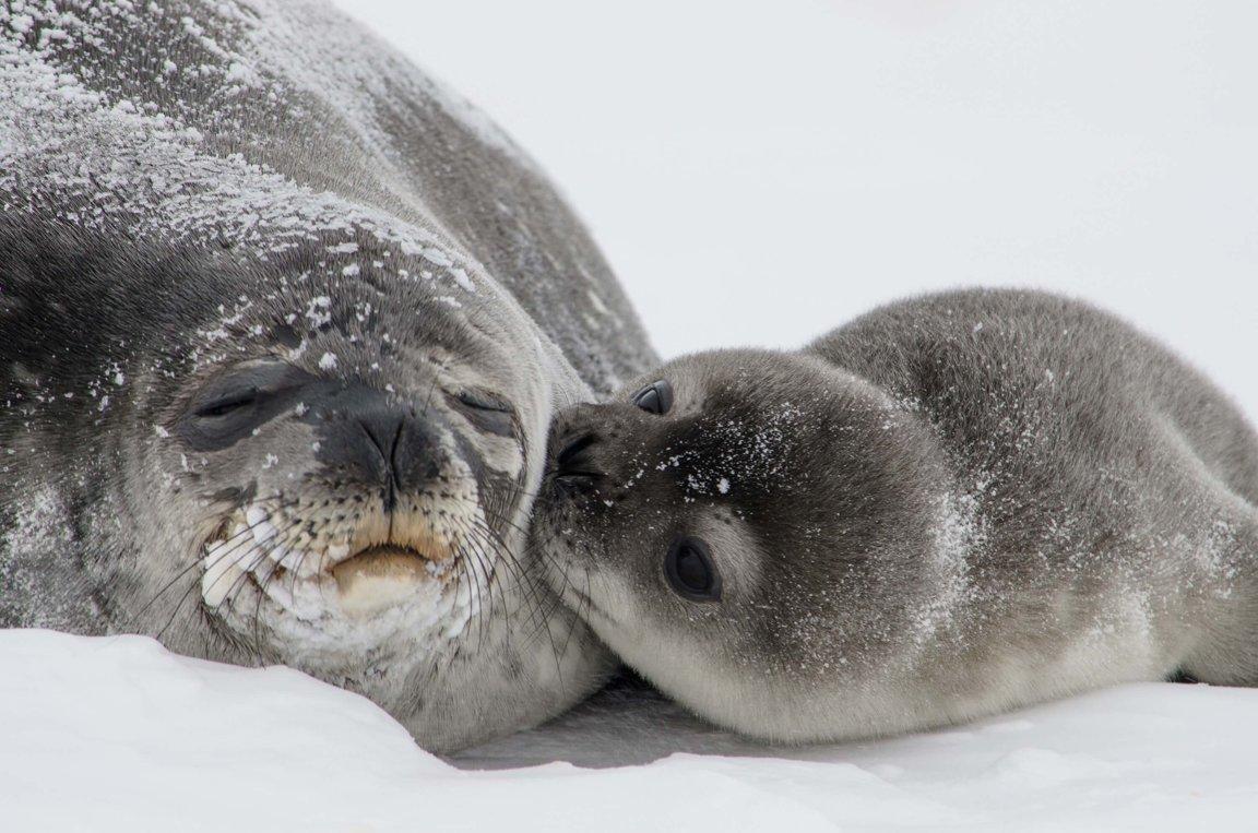 Marine Mammal Interaction