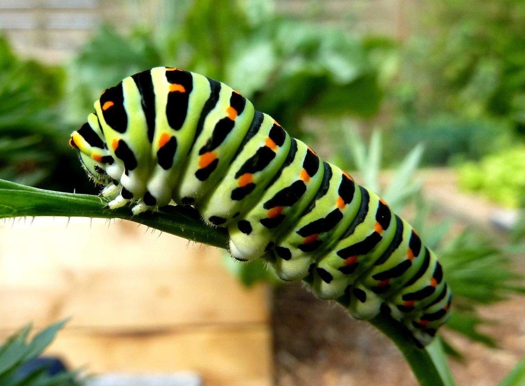 Caterpillars - Wild Animals News & Facts by World Animal Foundation