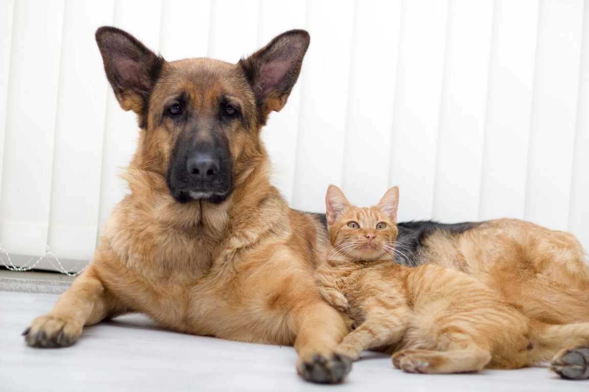 Legal Protections For Animals - Companion Animals News