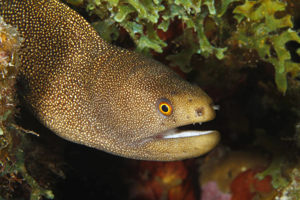 Eels - Wild Animals News & Facts by World Animal Foundation