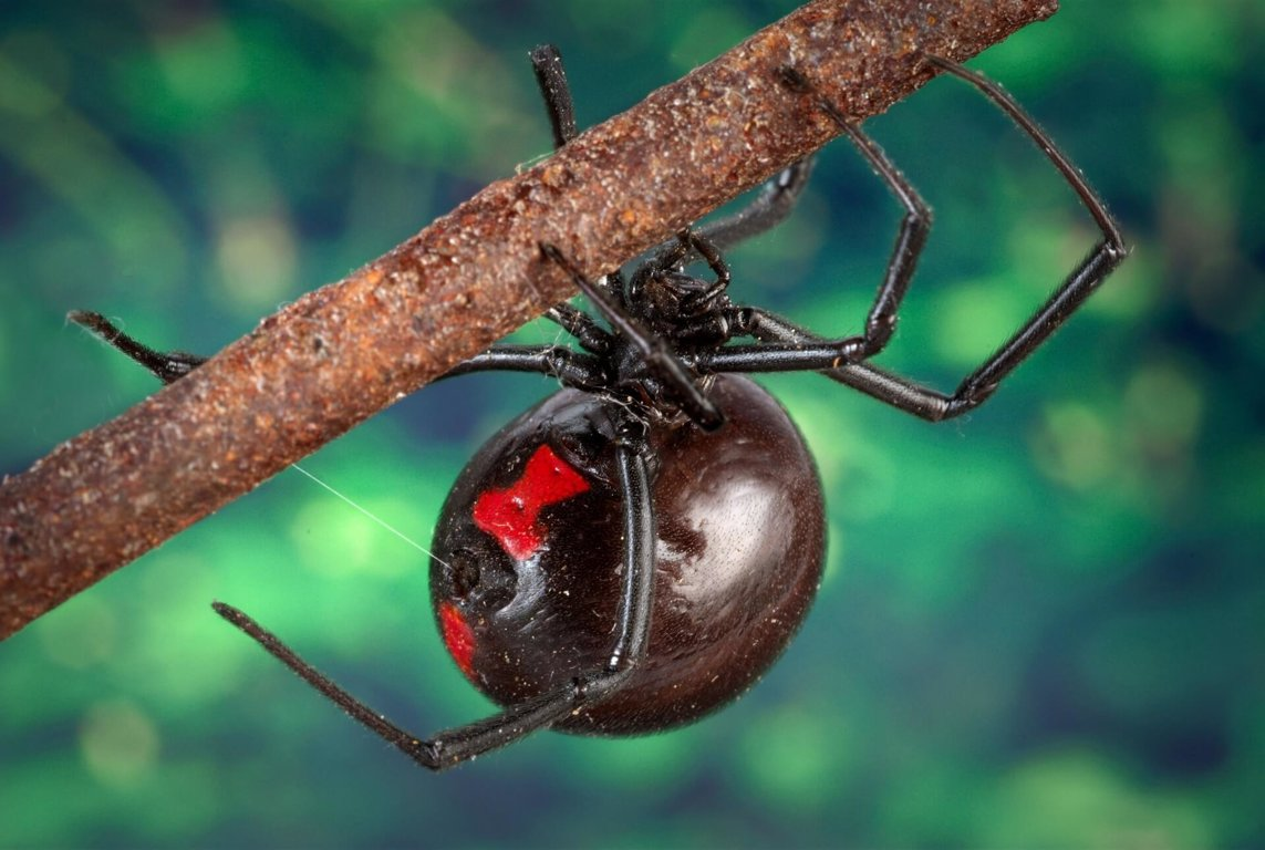 spiders wild animals news facts by world animal foundation