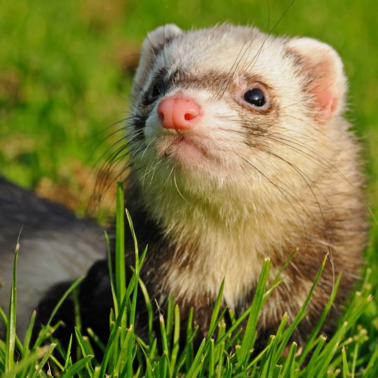 Companion Animals News & Facts by World Animal Foundation
