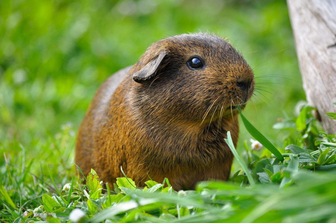 Guinea Pigs on Plant Life Cycle Kids Facts
