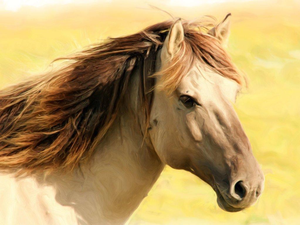 Horses - Farm Animals Facts & News by World Animal Foundation